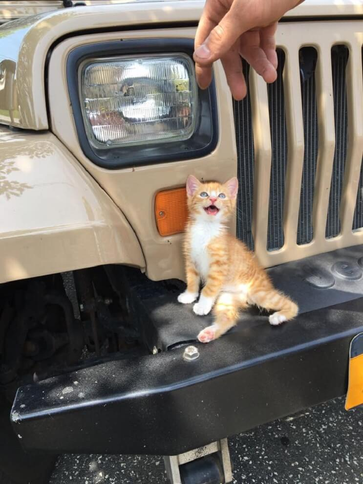 La discapacidad no detiene a este adorable gatito