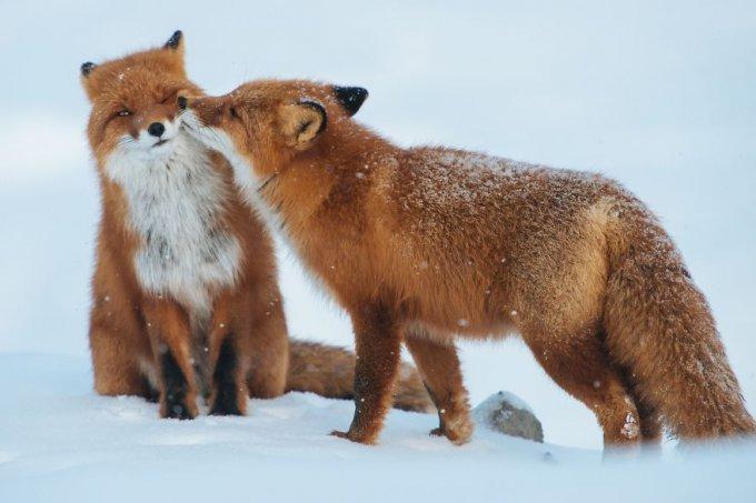 Animales besándose que demuestran que los besos no son solo para las personas (Parte 1)