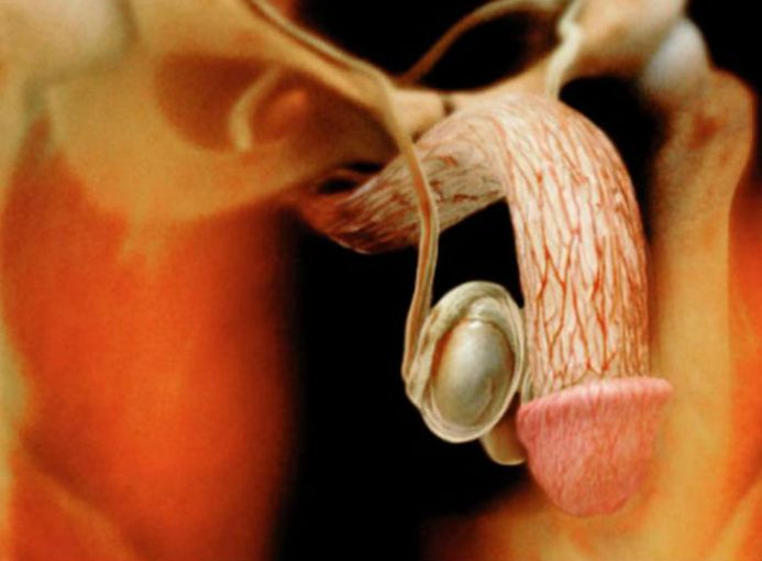 ¿Te imaginas cómo se ve cada una de las partes de tu cuerpo cuando tienes sexo?  [Fotos]