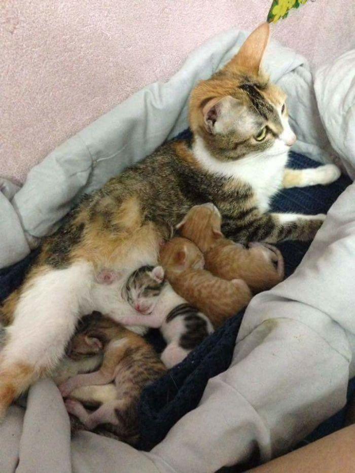 Este padre gato da su apoyo a mamá gata mientras da a luz y es lo más tierno