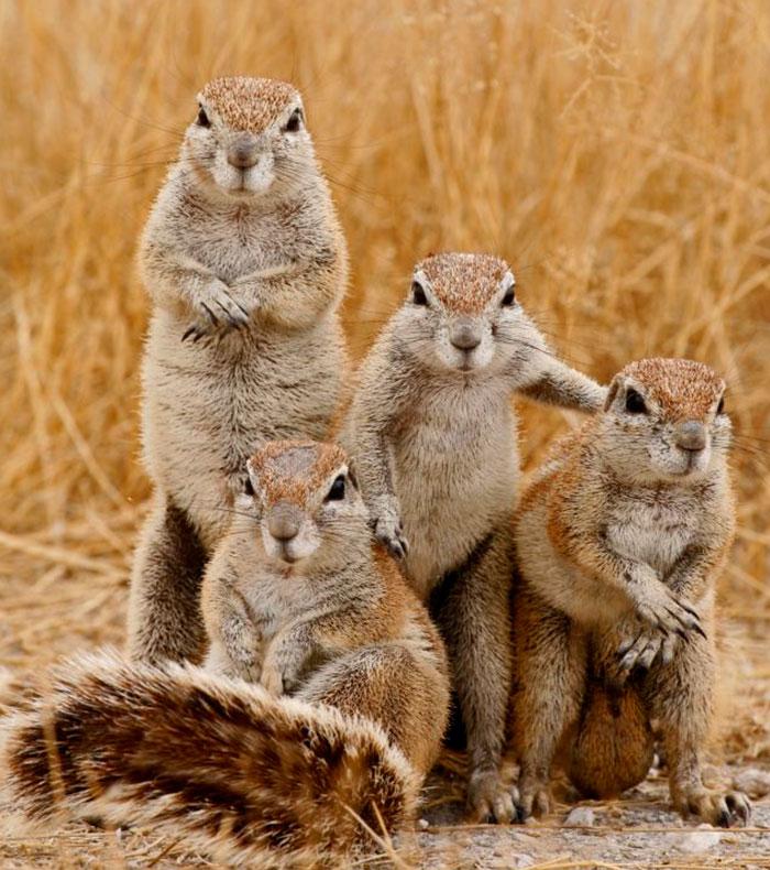 Animales que parece que vayan a sacar el disco más esperado del año