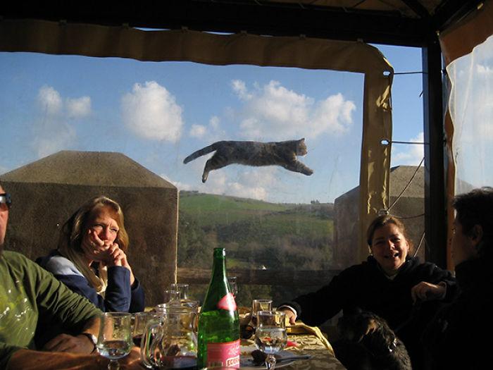 Gatos malvados que disfrutan haciendo photobomb en fotos ajenas (Parte 1)