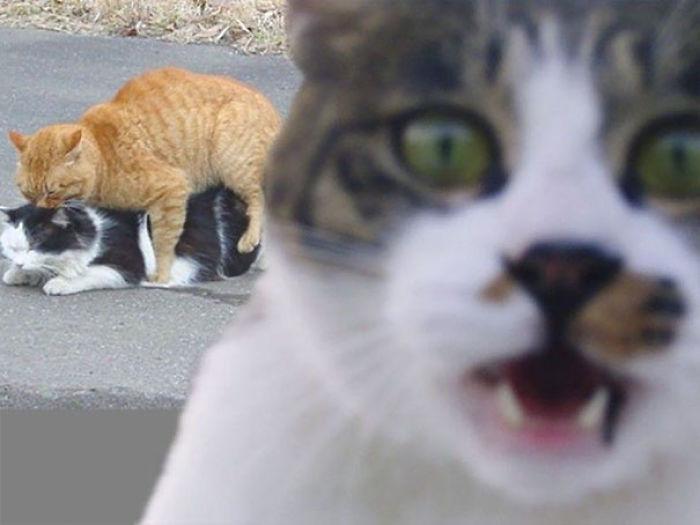 Gatos malvados que disfrutan haciendo photobomb en fotos ajenas (Parte 2)