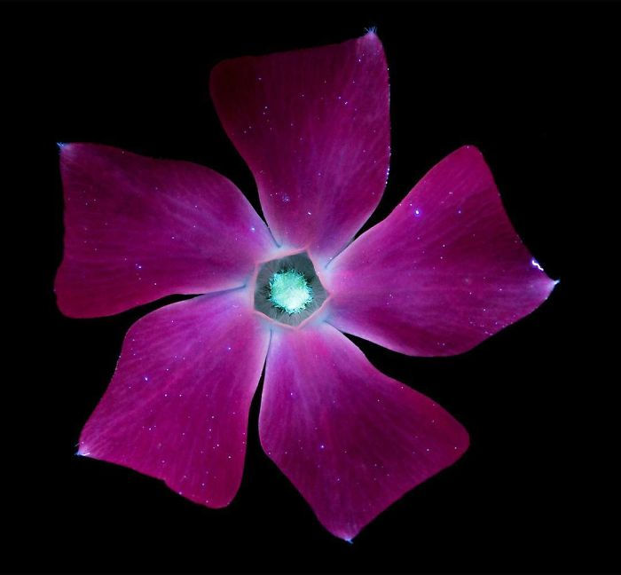 Fotografío la luz invisible que emiten las plantas