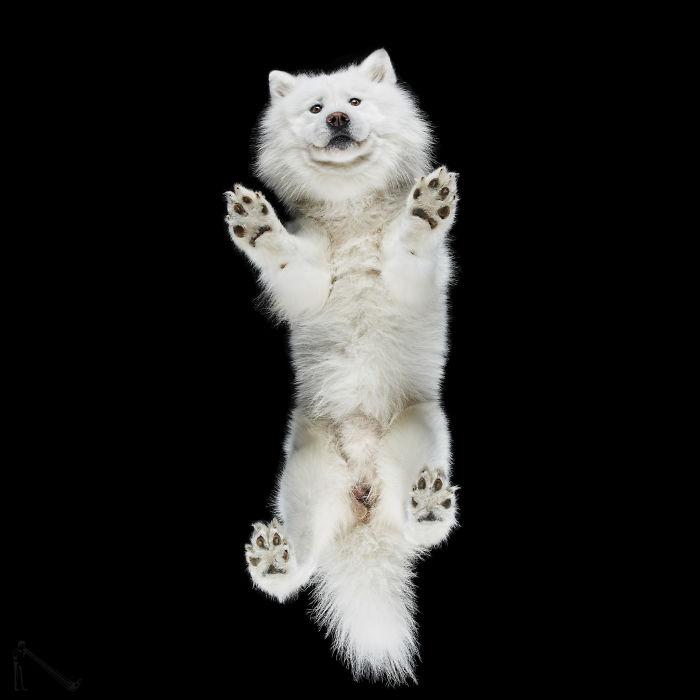 Under-Dogs: Retrato a los perros desde abajo