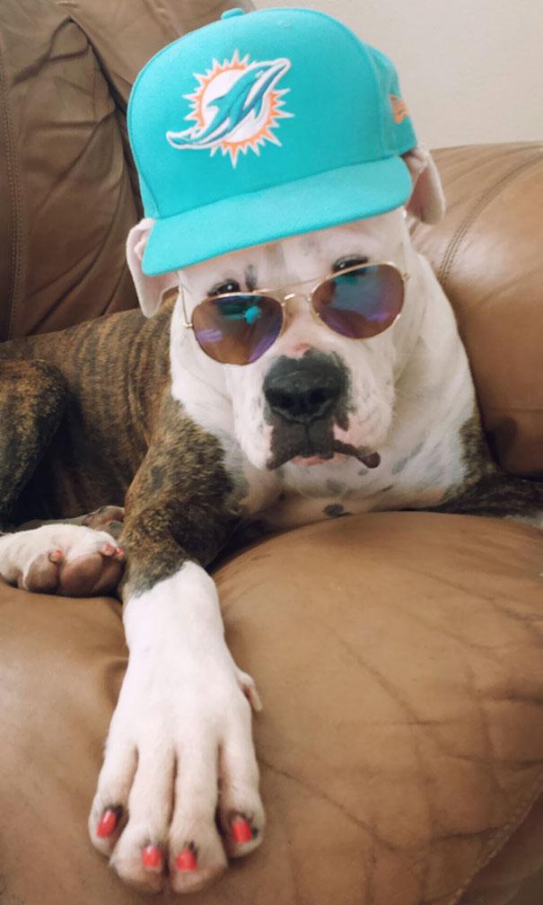 La divertida vida de tus mascotas cuando está al cuidado de otras personas (Parte 1)