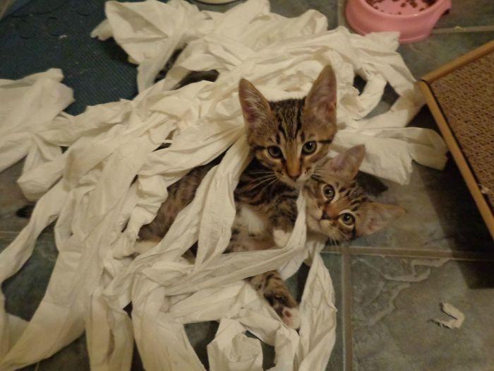 Comparte los desastres que lían tus mascotas cuando las dejas solas (Parte 1)