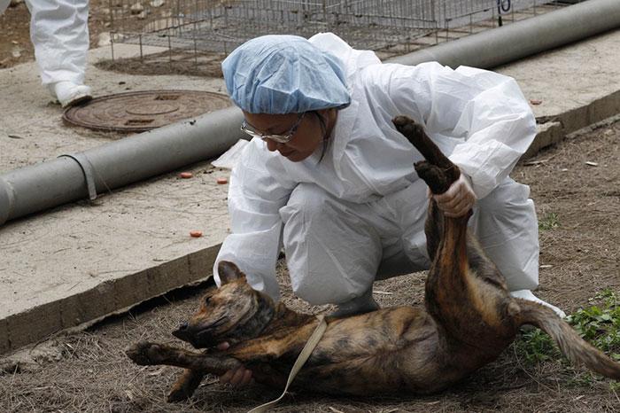 Taiwán se convierte en el 1º país asiático en prohibir comerse a gatos y perros