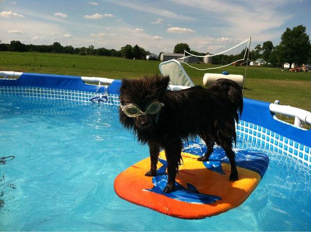 La divertida vida de tus mascotas cuando están al cuidado de otras personas (Parte 2)