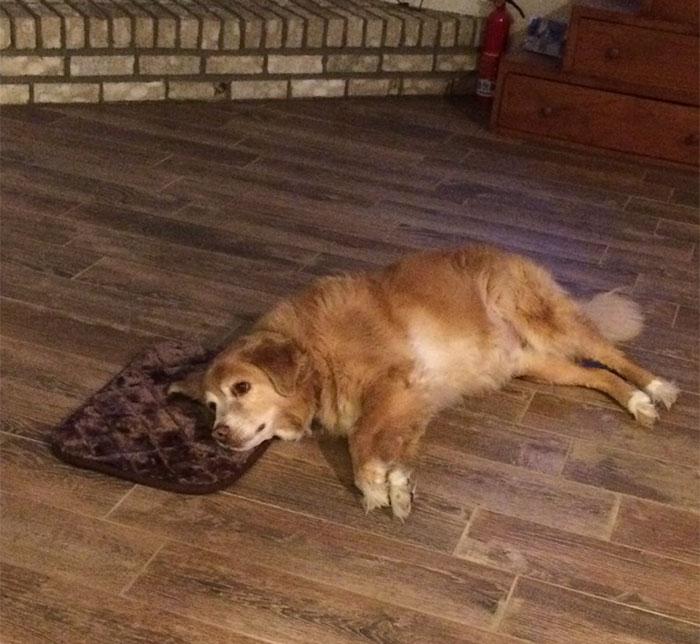 Esta mujer encargó accidentalmente una cama diminuta  para su perro, pero este simuló que todo estaba bien